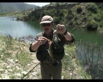 скачать видео о ловле толстолобика